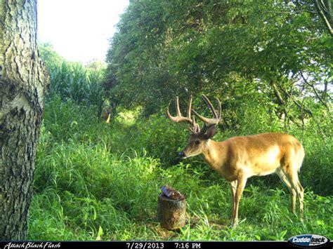 Moose wikipedia jpg 781x586