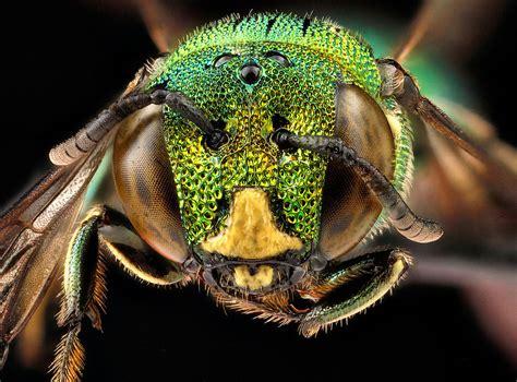 The naked bee jpg 800x592